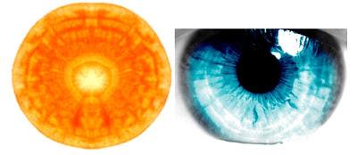 3Carrott-Eyeball