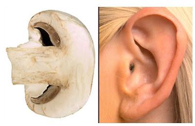 7Mushroom-Ear